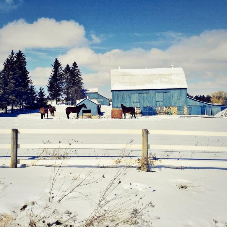 Winter Afternoon in King Township